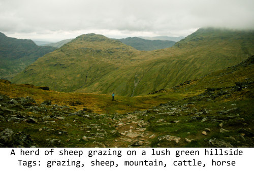 Fig. 11: Description: A herd of sheep grazing on a lush green hillside Tags: grazing, sheep, mountain, cattle, horse