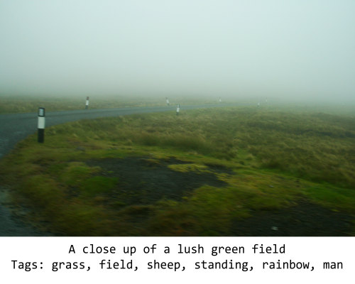 Fig. 12: Description: A close up of a lush green field Tags: grass, field, sheep, standing, rainbow, man