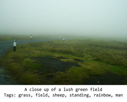 Fig. 12: Description: A close up of a lush green field Tags: grass, field, sheep, standing, rainbow, man