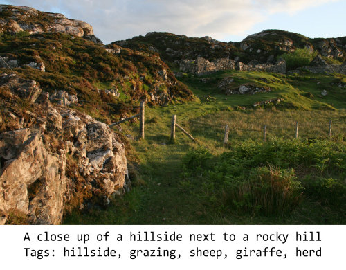Fig. 10: Description: A close up of a hillside next to a rocky hill Tags: hillside, grazing, sheep, giraffe, herd